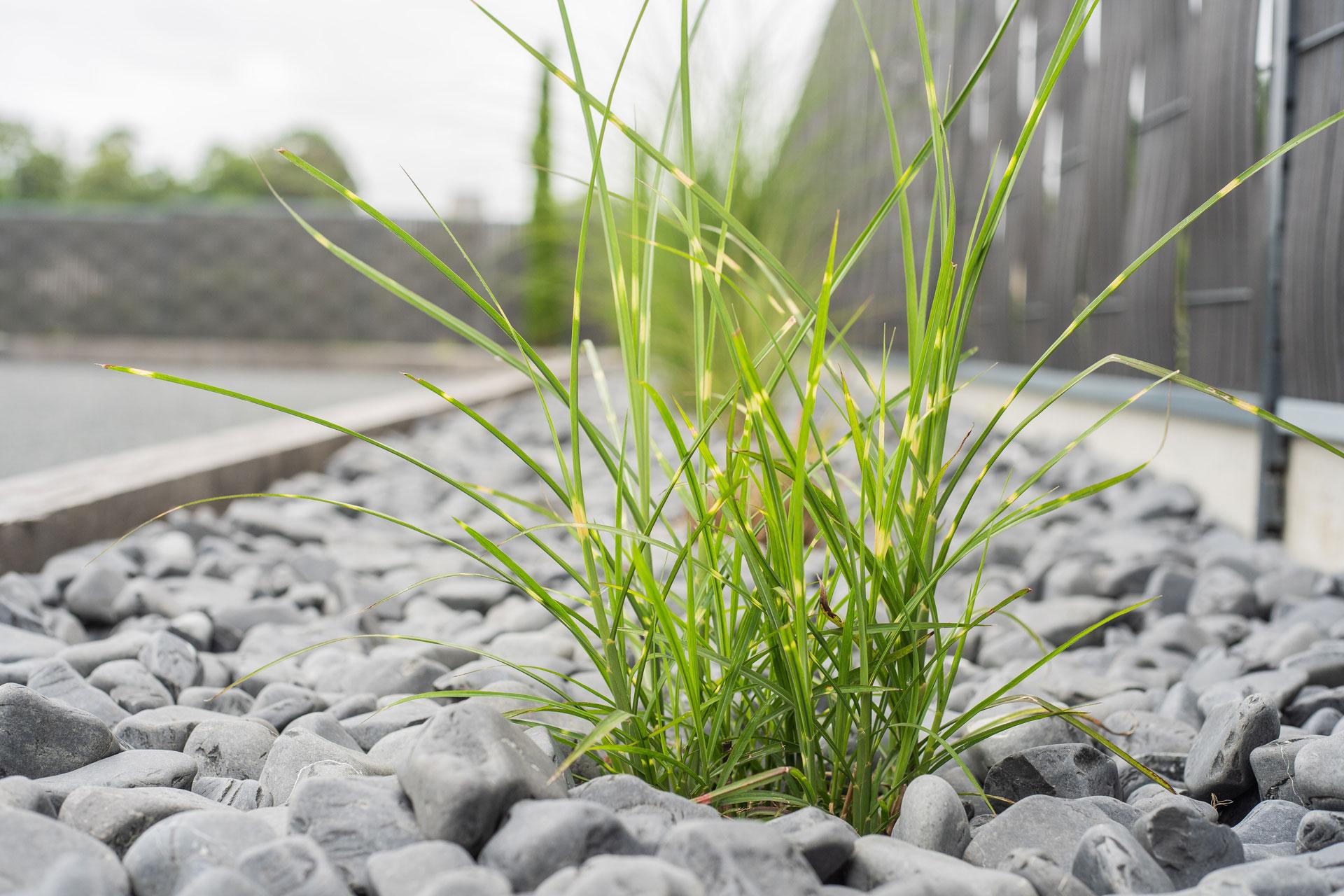 photo chantier un coin de nature paysagiste bayeux